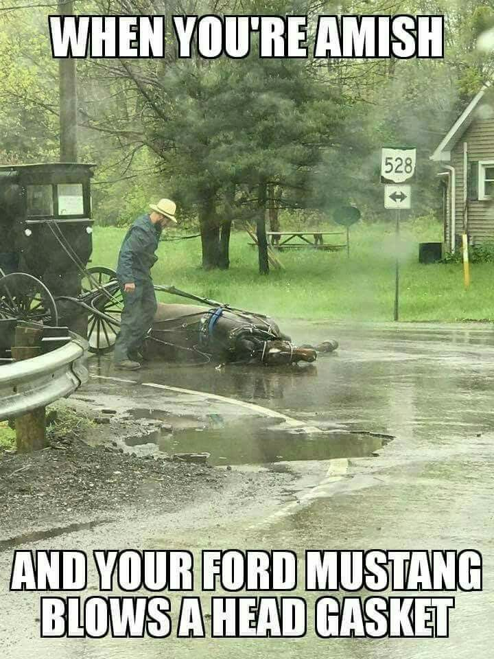 when you re amish and your ford mustang blows a head gasket haha