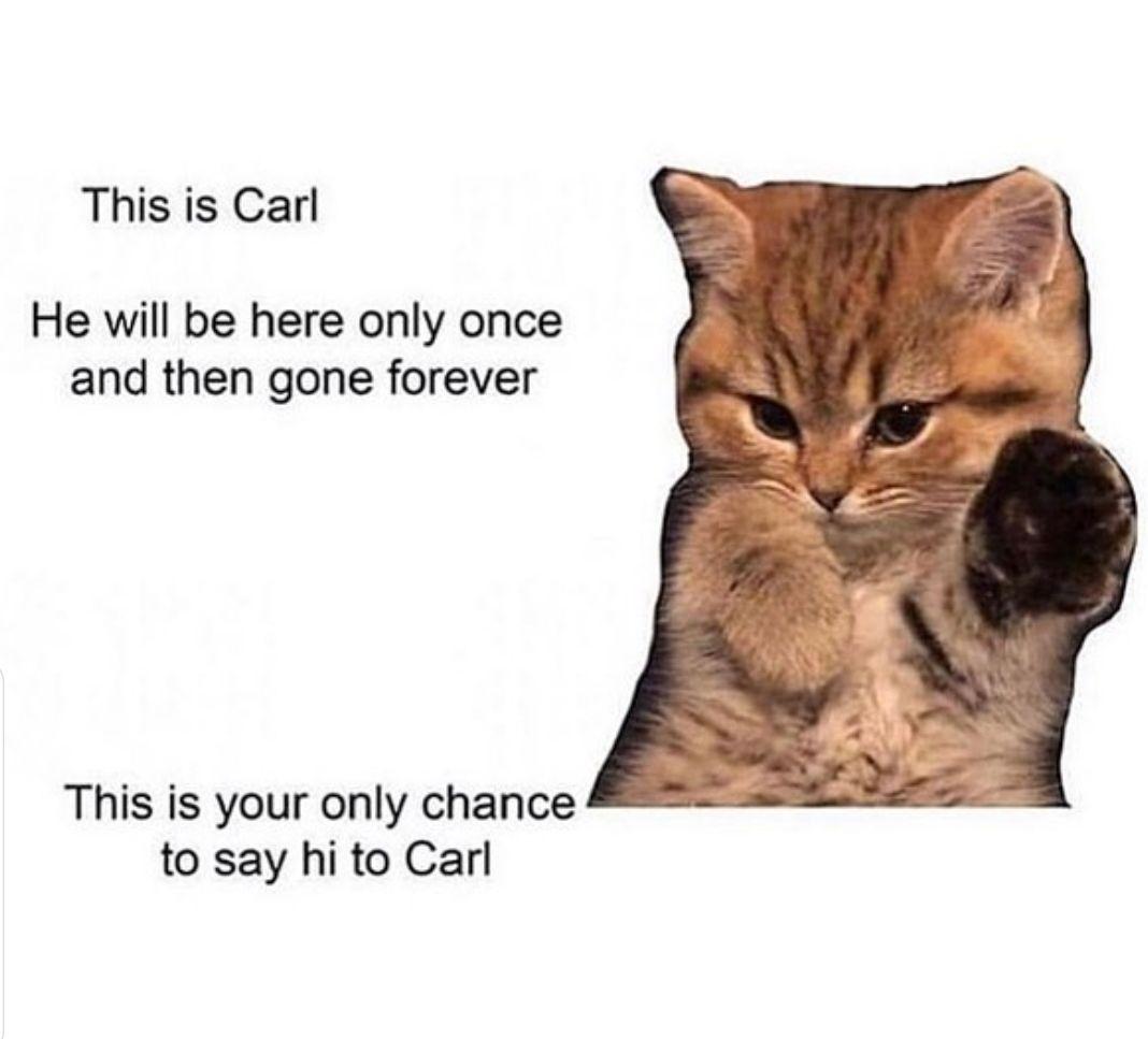 A Wholesome Cat Memehttps I Redd It 86ijabxnuiv21 Jpg Funny Memes Say Hi Cat Memes