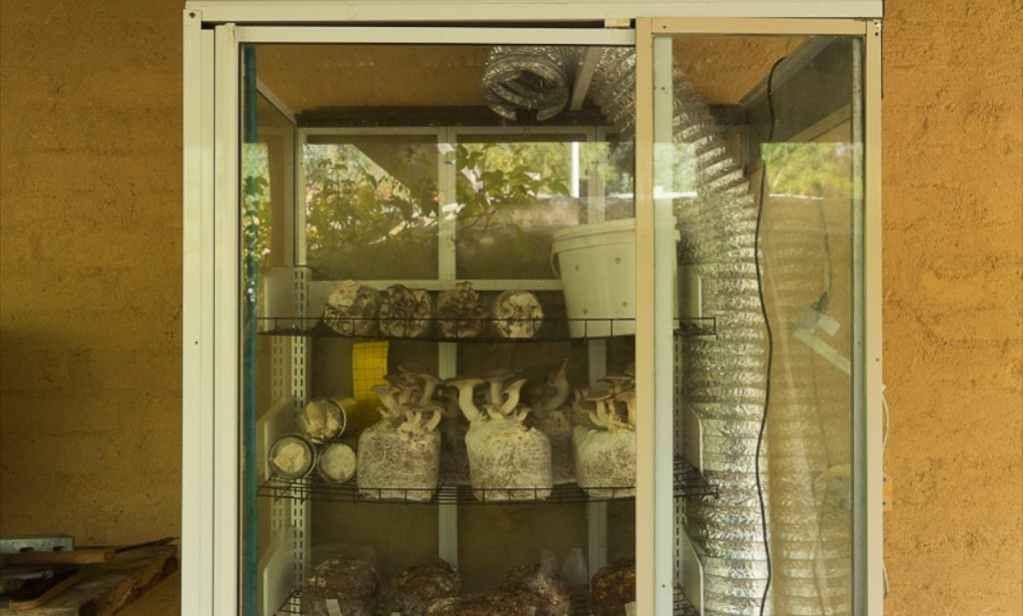 Making an Offgrid DIY Mushroom Fruiting House Mushroom