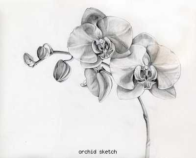 Orchid With Images Orchid Tattoo Black Tattoos Flower Tattoos
