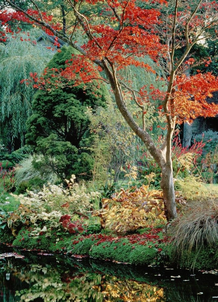 Château de Courances » le jardin japonais
