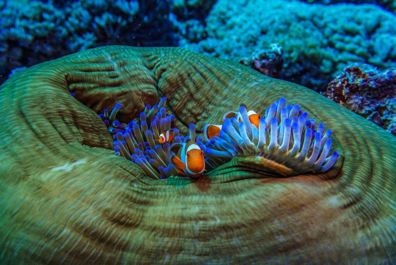 bildergebnis für korallen  korallen bilder