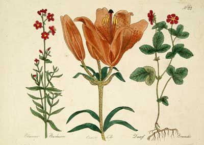Darwin Country - Herbals