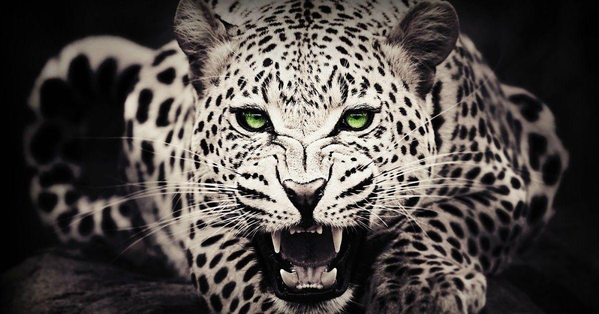 احدث المقالات اليومية المتنوعة في عالم التقنية والتصميمات والديكور Cheetah Wallpaper Wild Animal Wallpaper Leopard Wallpaper