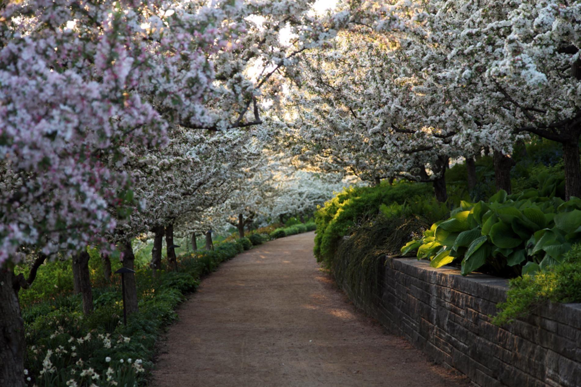 Spring Photos Spring Landscape Chicago Botanic Garden Landscape Pictures