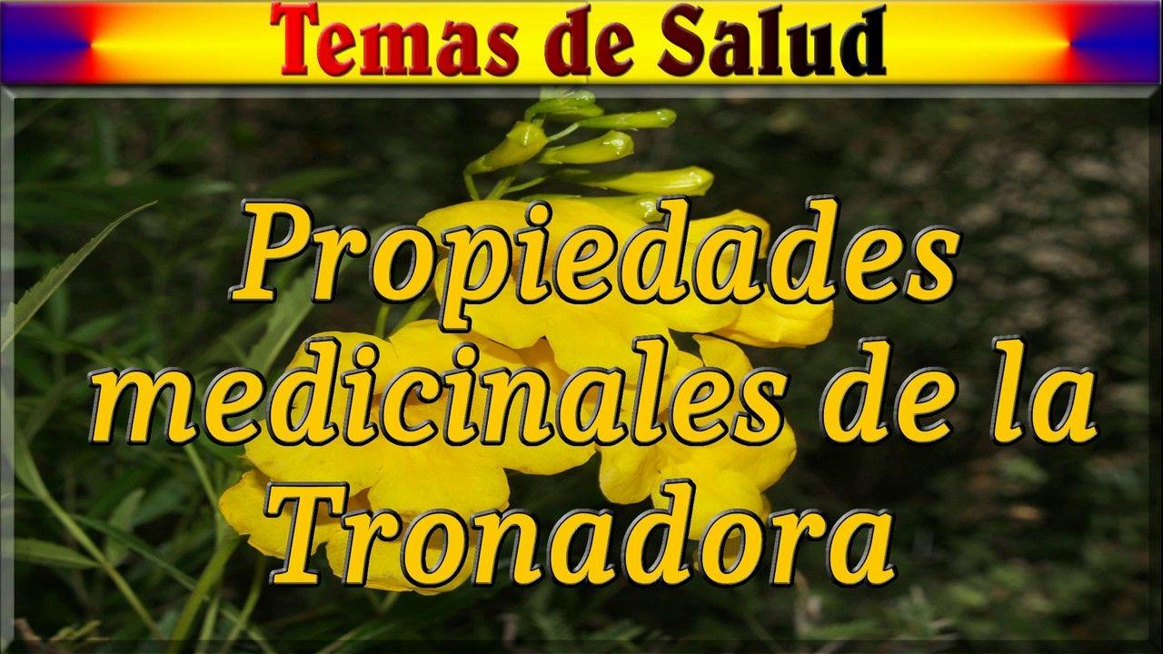 Alpiste Propiedades Medicinales Del Limon Wwwmiifotoscom