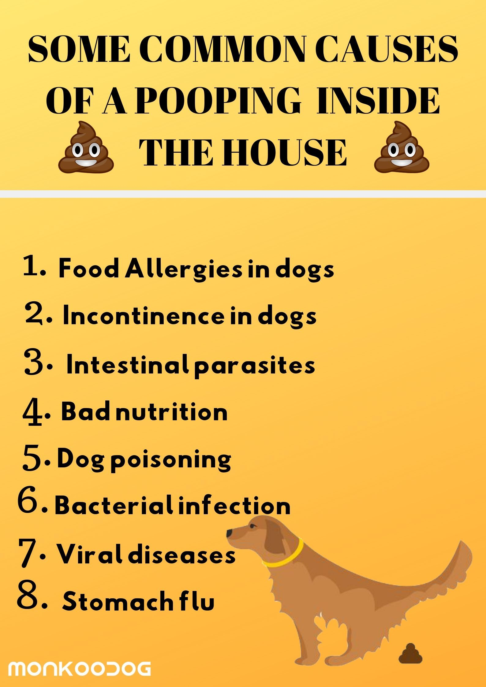 Pin By Heidi Sanchez On Mr Rupert Training Your Dog Dogs