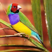 BIRDSCOLORFULPAJAROSAVESCOLORESUNUSUALINUSUALES39
