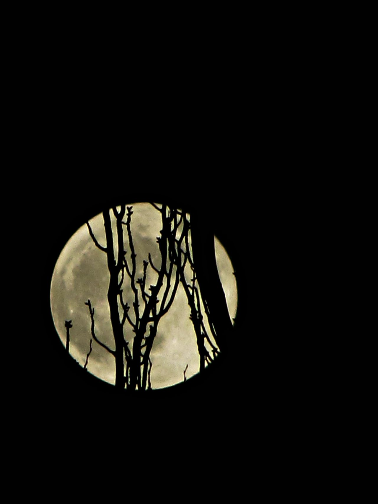 Full moon behind the trees.  (We´re looking at the same moon tho we´re miles apart) by Laura B. Fernández. S)