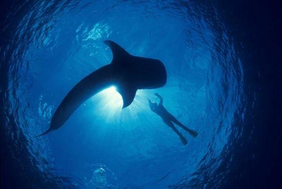 strangers in oceans !!!