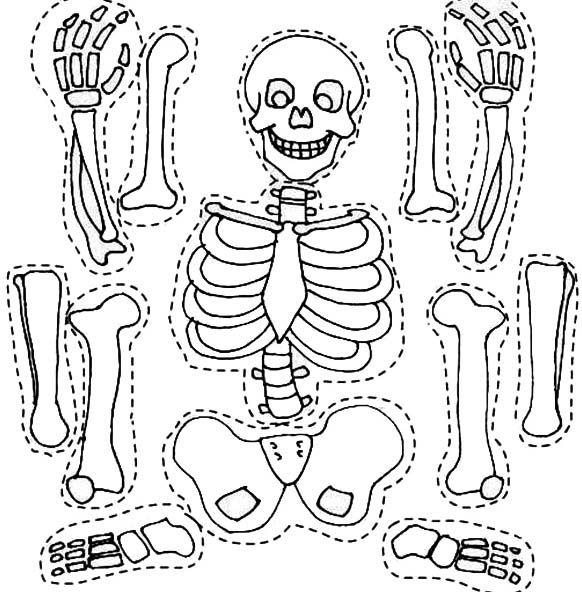 Skeleton And His Bones Part Coloring Page Jpg 582 592 Skeleton Craft Human Body Activities Skeleton For Kids