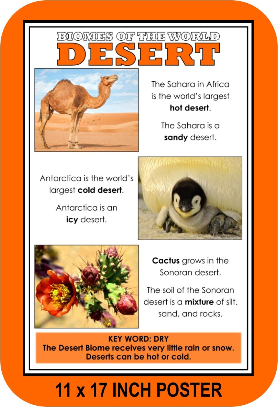 Highlight The Science Center With These Colorful Posters From Let S Get Real Biomes Geography For Kids Homeschool Science