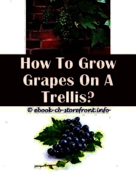 Growing Locations 3 Enthusiastic Cool Tri How Many Grape Vines To Plant  Grape Growing Locations 3 Enthusiastic Cool Tricks How To Grow How Many Grape Vines To Plant  Gra...