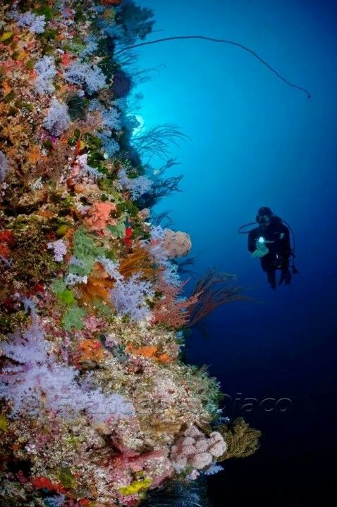 The Great White Wall Rainbow Reef Somosomo Straight Fiji Fiji Underwater Images Fiji Islands