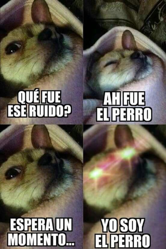 Memes Memes De Animales Divertidos Memes Comicos