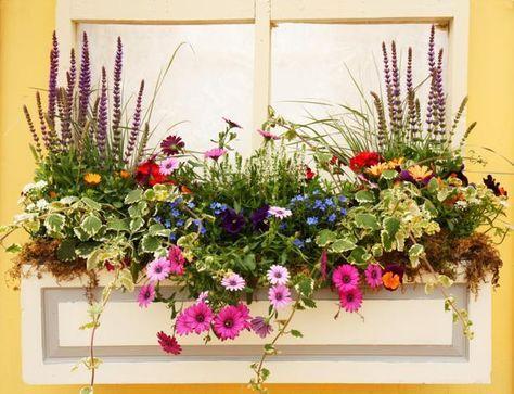 Kompozycje Skrzynki Balkonowej Container Flowers Beautiful Flowers Garden Garden Containers
