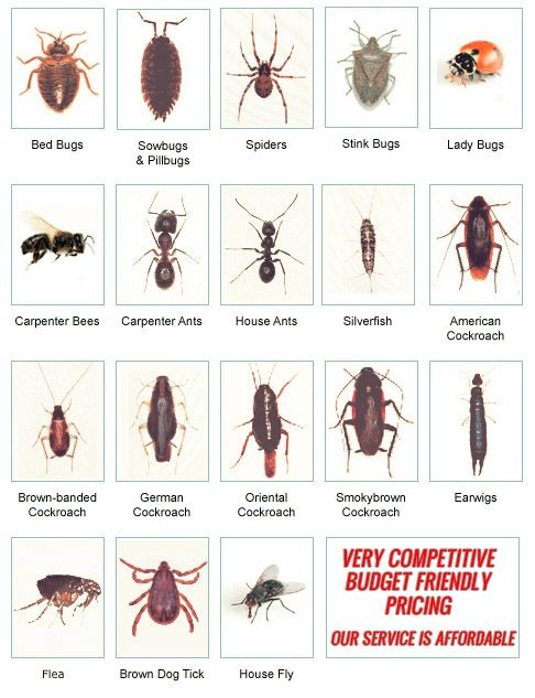 Pest Control Pasco County Hernando North Pinellas New Port Richey Hudson  Spring Hill  Pest Control. Tick Like Bugs In House   designaglowpapershop com