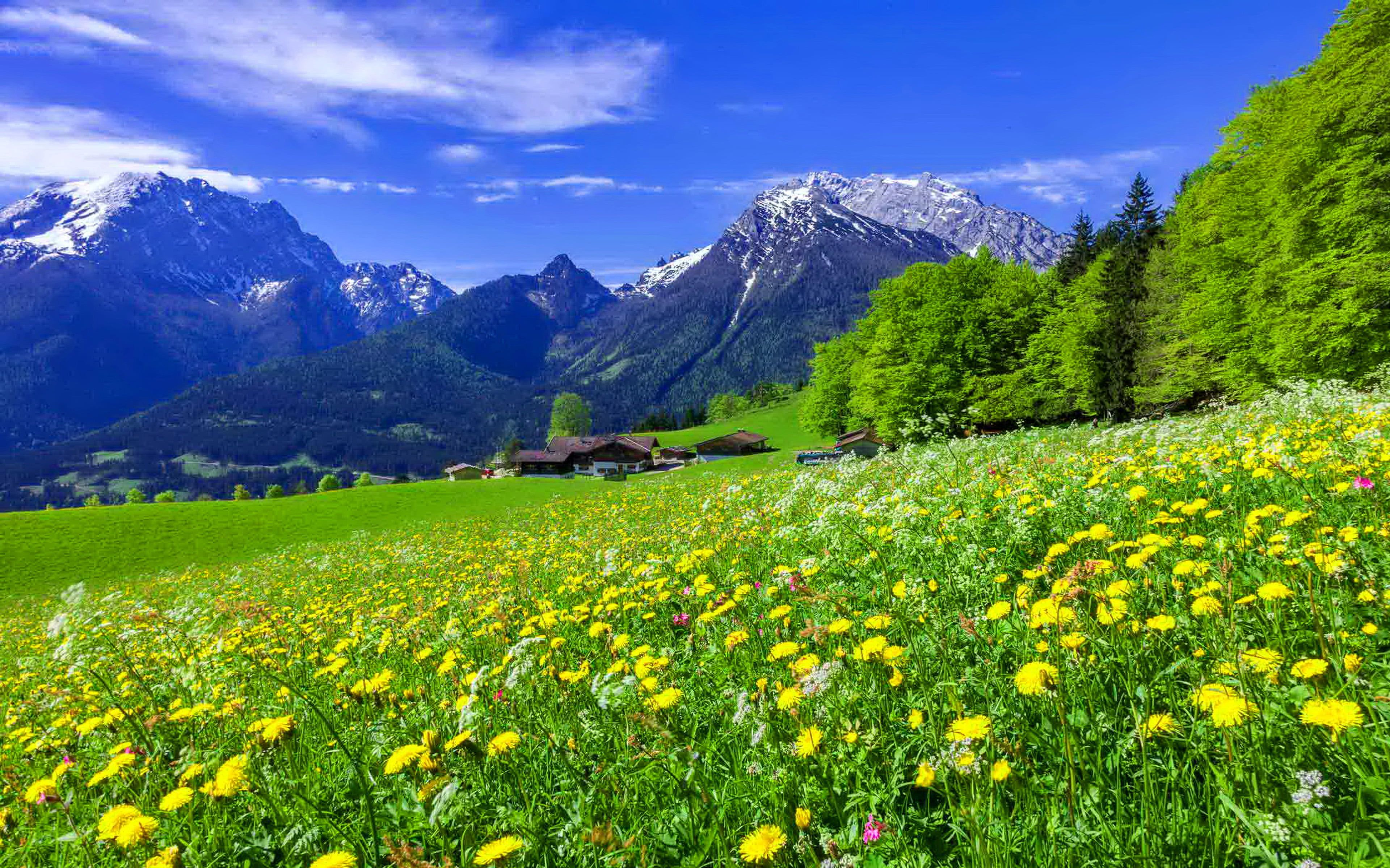 Mountain Meadow Landscape With Beautiful Mountain Flowers Yellow And White Flowers An Desktop Wallpapers Backgrounds Wallpaper Nature Flowers Pretty Landscapes