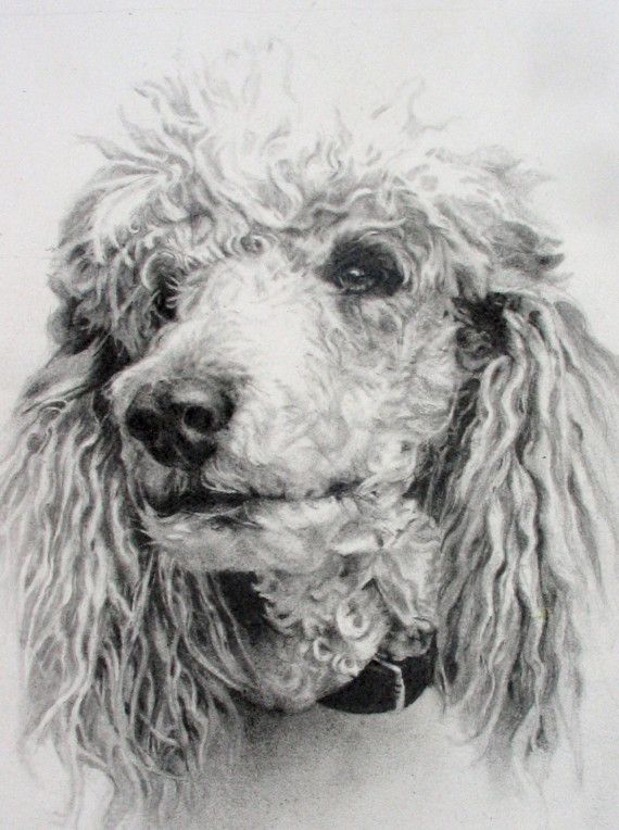 Poodles Head Oil Painting