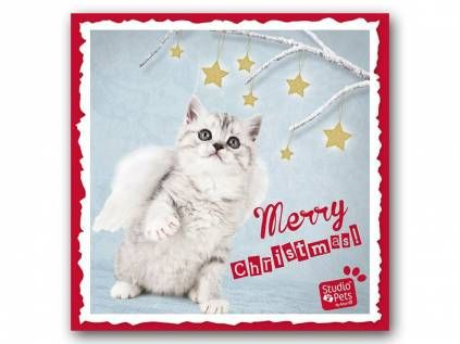 Hunderassen WeihnachtskartenMyrna Weihnachtskarte: Kitten - Katze