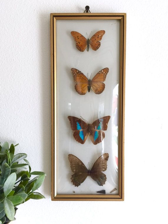 Taxidermy butterly framed wall art real 4 butterflies framed mounted butterfly picture with curved