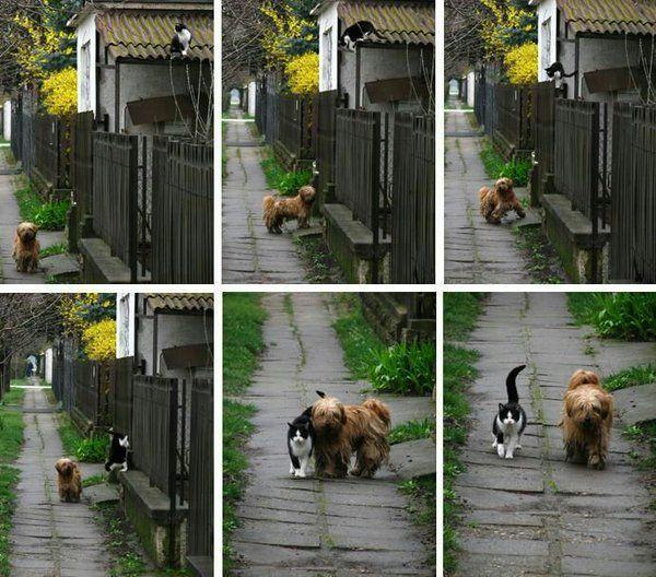 Todo dia no mesmo horário eles saem para passear.