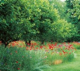 Orchards Are An Ancient Way Of Farming Trees That Also Pleases The Eye The Regular Rows Follow The Contours Of T Fruit Tree Garden Sloped Garden Trees To Plant
