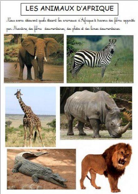 Afrique Maternelle Recherche Google Animaux Afrique Afrique Imagier Animaux