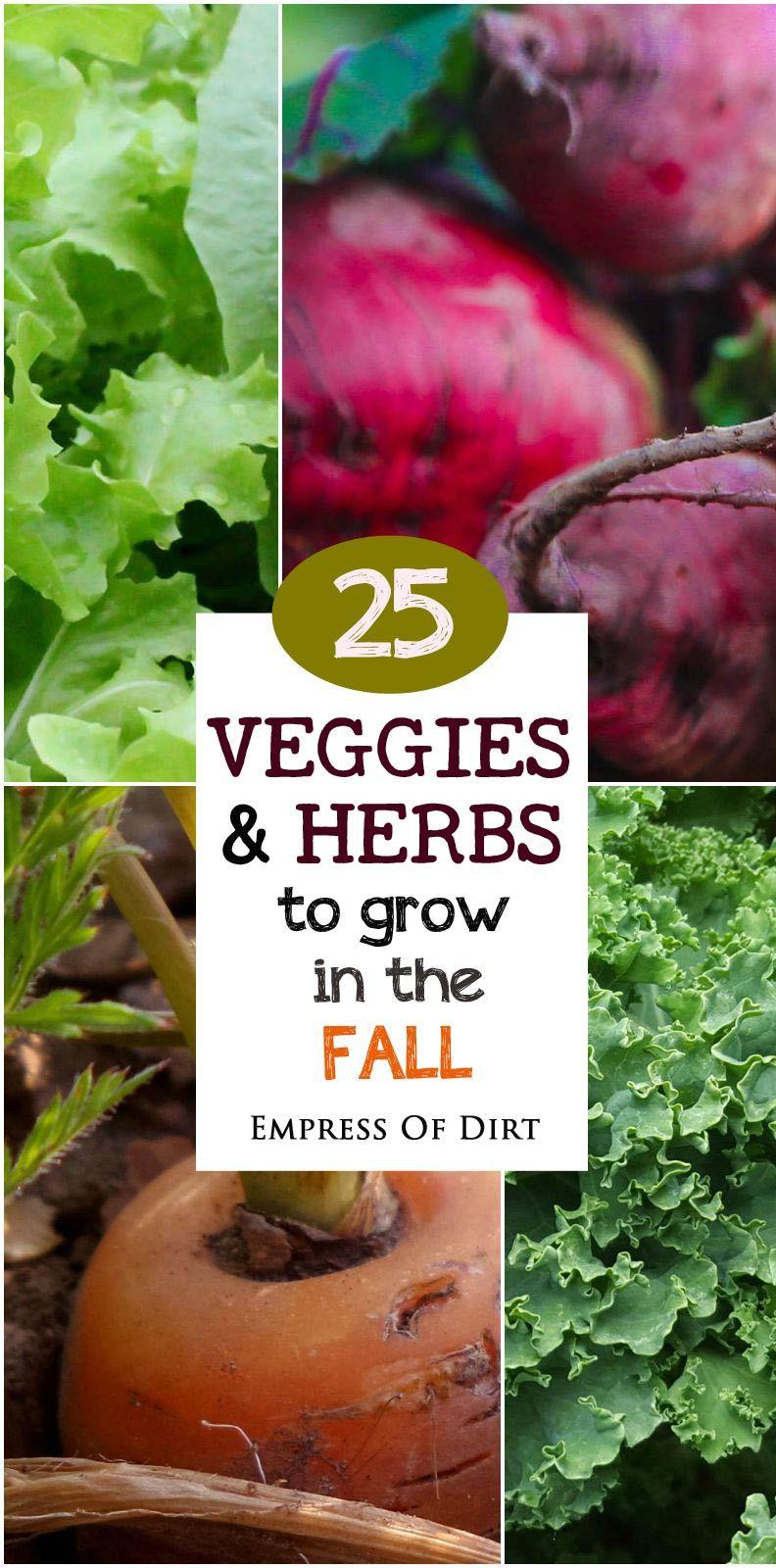 25 veggies u0026 herbs to grow in the fall lettuce kale and broccoli