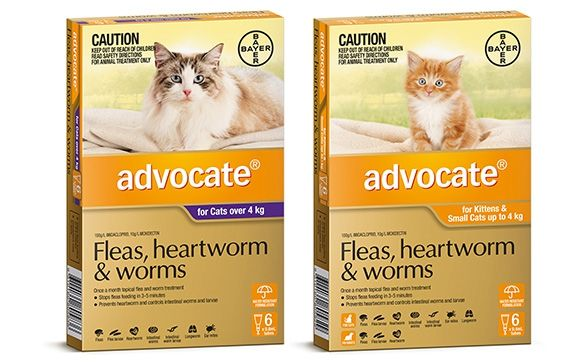 Advocate For Cats Fleas Heartworm Hookworm Roundworm Ear Mites 6 Pack Cat Fleas Fleas Roundworm