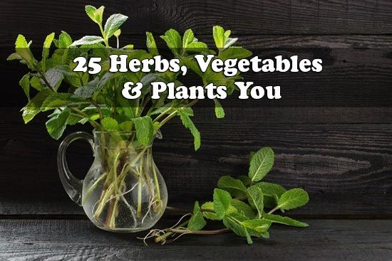 25 Herbs, Vegetables and Plants You Can Grow In Water