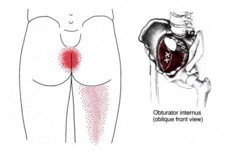 Anal Sphincter Pain Intestinal Pain