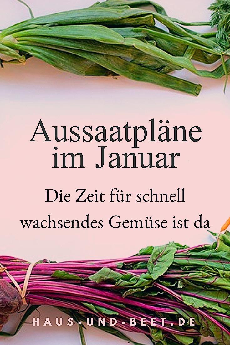 Photo of Aussaatpläne im Januar – Das neue Gartenjahr beginnt – Haus und Beet