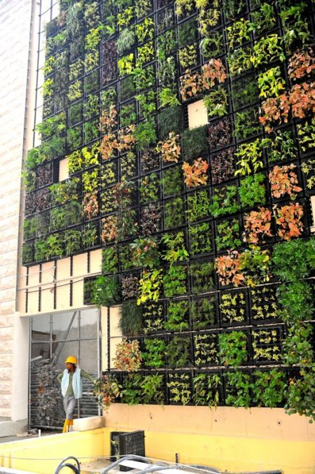 Projects | Skyrise Greenery