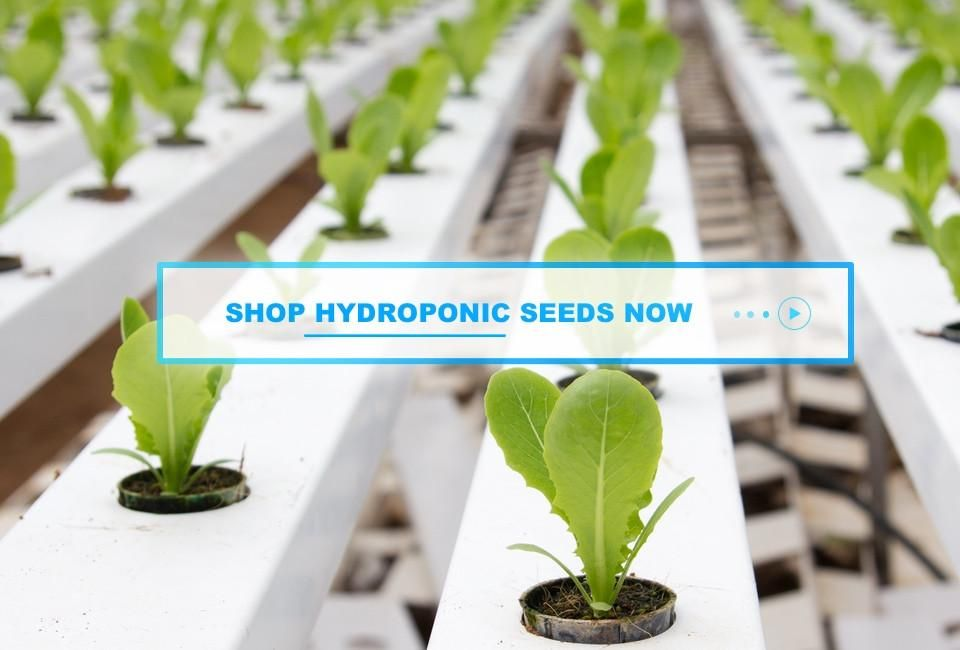 Online Seed Shop Catalog Order Seeds Now Seedsnow Com In