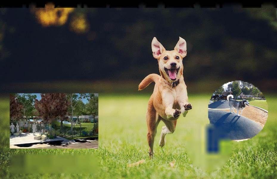 Pin on Pet Friendly Planning (Urban Planning)