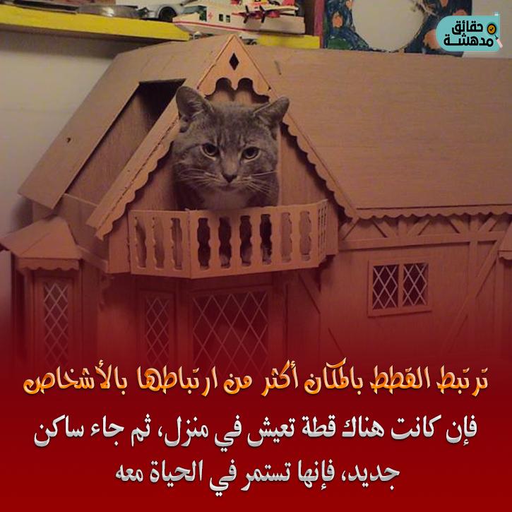 Https Www Facebook Com Haqaaq Photos Pcb 2473483612883492 2473479739550546 Type 3 Photo Cats Animals