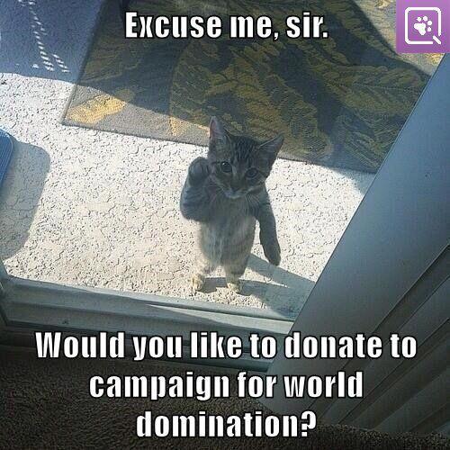 #kittyforworlddomination2015