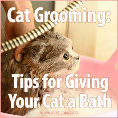 your cat can be a tough process–nothing seems to bring out the claws quicker than the sound of running water. In order to keep this event as safe as possible for you and your cat, keep the following tips in mind. Bathing your cat can be a tough process–nothing seems to bring out the claws quicker than the sound of running water. In order to keep...