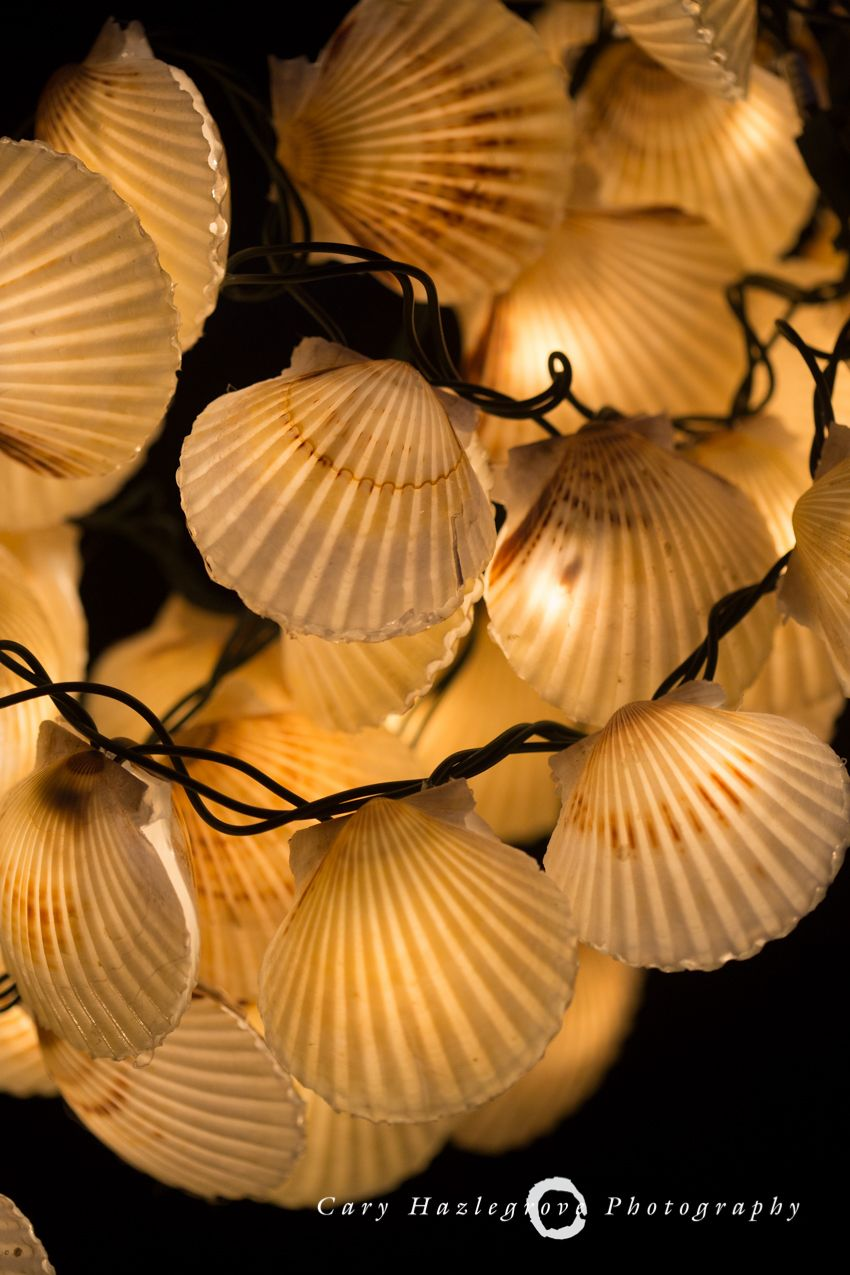 nantucket bay scallop shells recycled into christmas lights