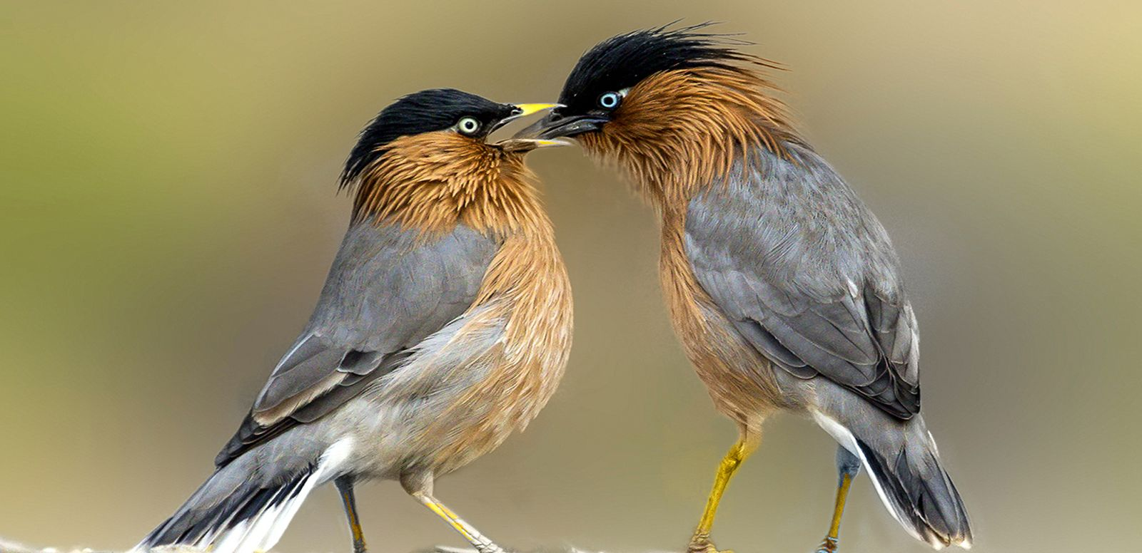 the site is to share free bird animal nature wildlife images