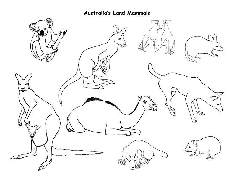 Animales Mamiferos Para Colorear Az Dibujos Para Colorear En 2020 Paginas Para Colorear De Animales Animales Australianos Animales Del Desierto