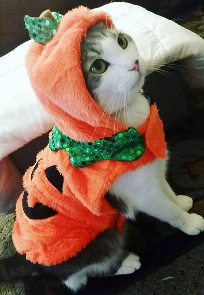 The 30 Cutest Halloween Costumes for Cats Halloween costumes - cute cat halloween costume ideas