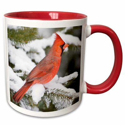 Photo of The Holiday Aisle Oberry Northern Cardinal in Balsam Fir Tree in Winter Coffee Mug | Wayfair
