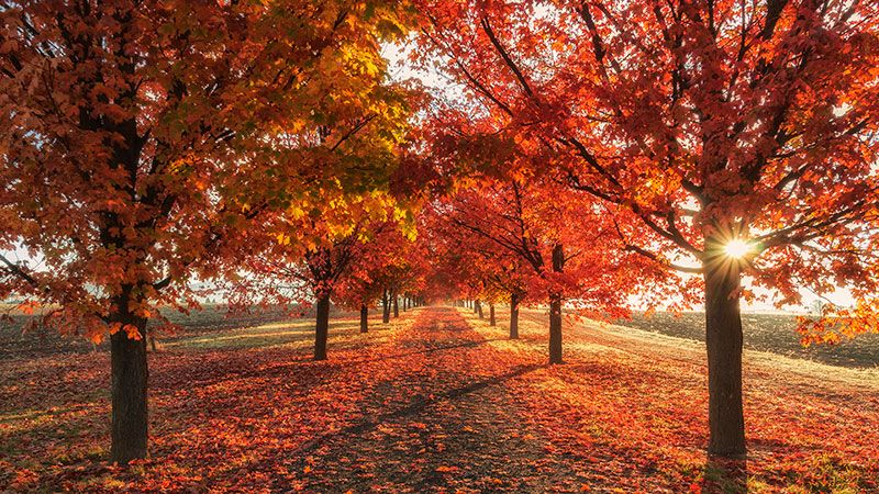 4k Fall Wallpapers For Desktop Ipad Iphone In 2020 Fall Wallpaper Autumn Landscape Autumn Activities