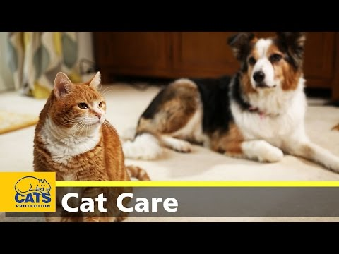 How to introduce cats to dogs YouTube in 2020 How to