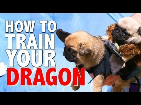 How To Train Your Dragon Pug Puppy Version Youtube How