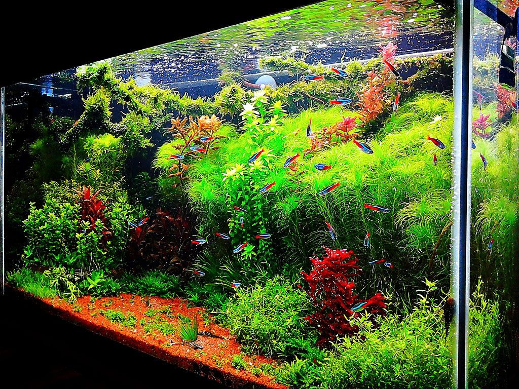 Fish tank ideas interior design the unique of for Design aquarium