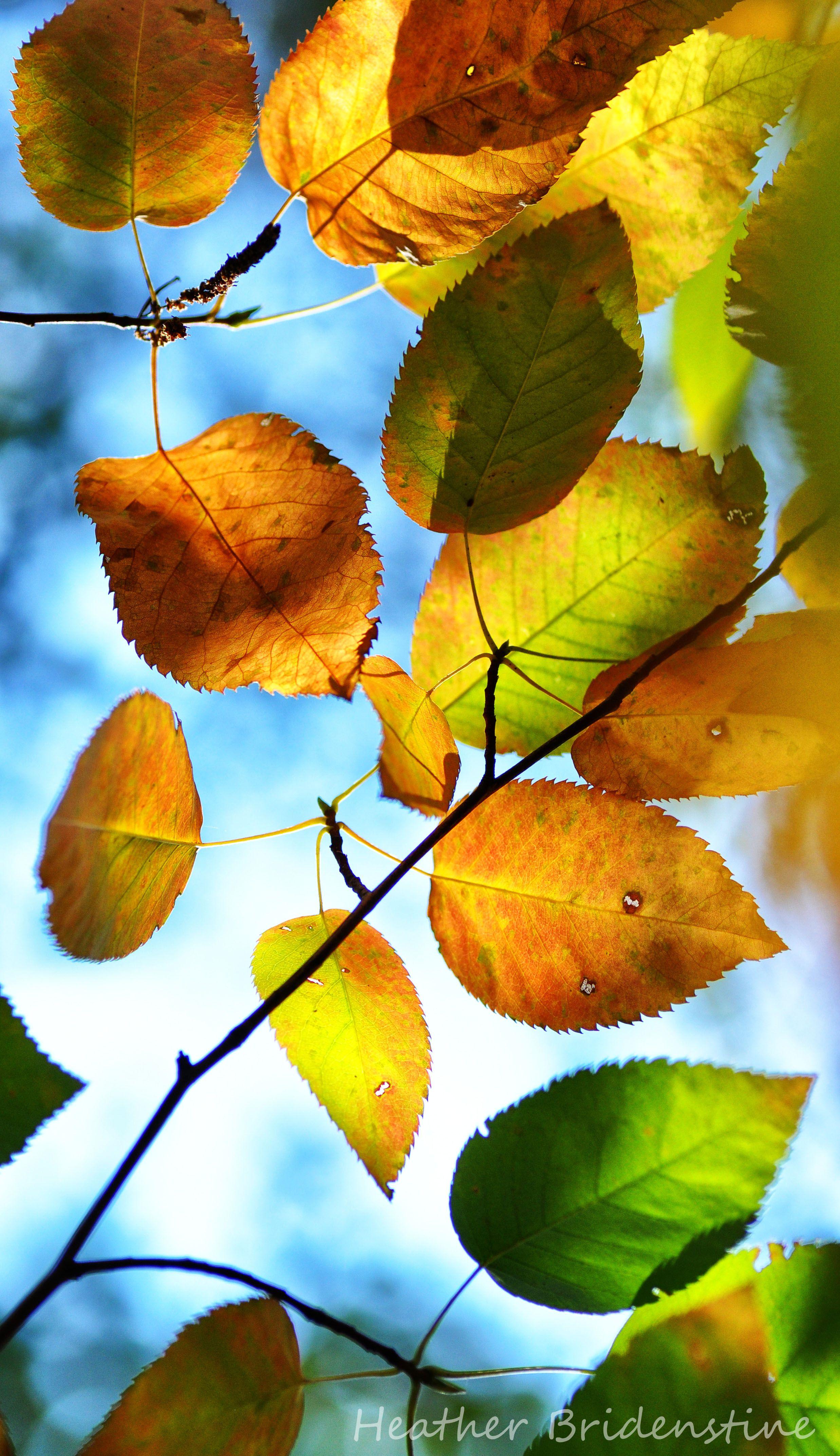 Changing color | FLORES E NATUREZA | Pinterest | Hoja, Otoño y ...