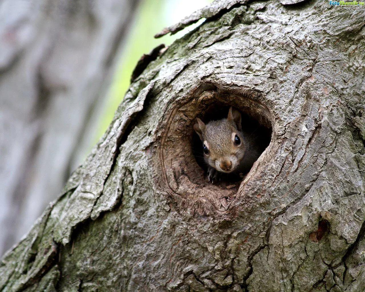 жилища животных леса картинки две новости одном